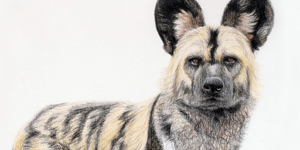 Painted Dog - Click here to visit the online Gallery